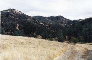 Bear Mountain, Henry Coe State Park